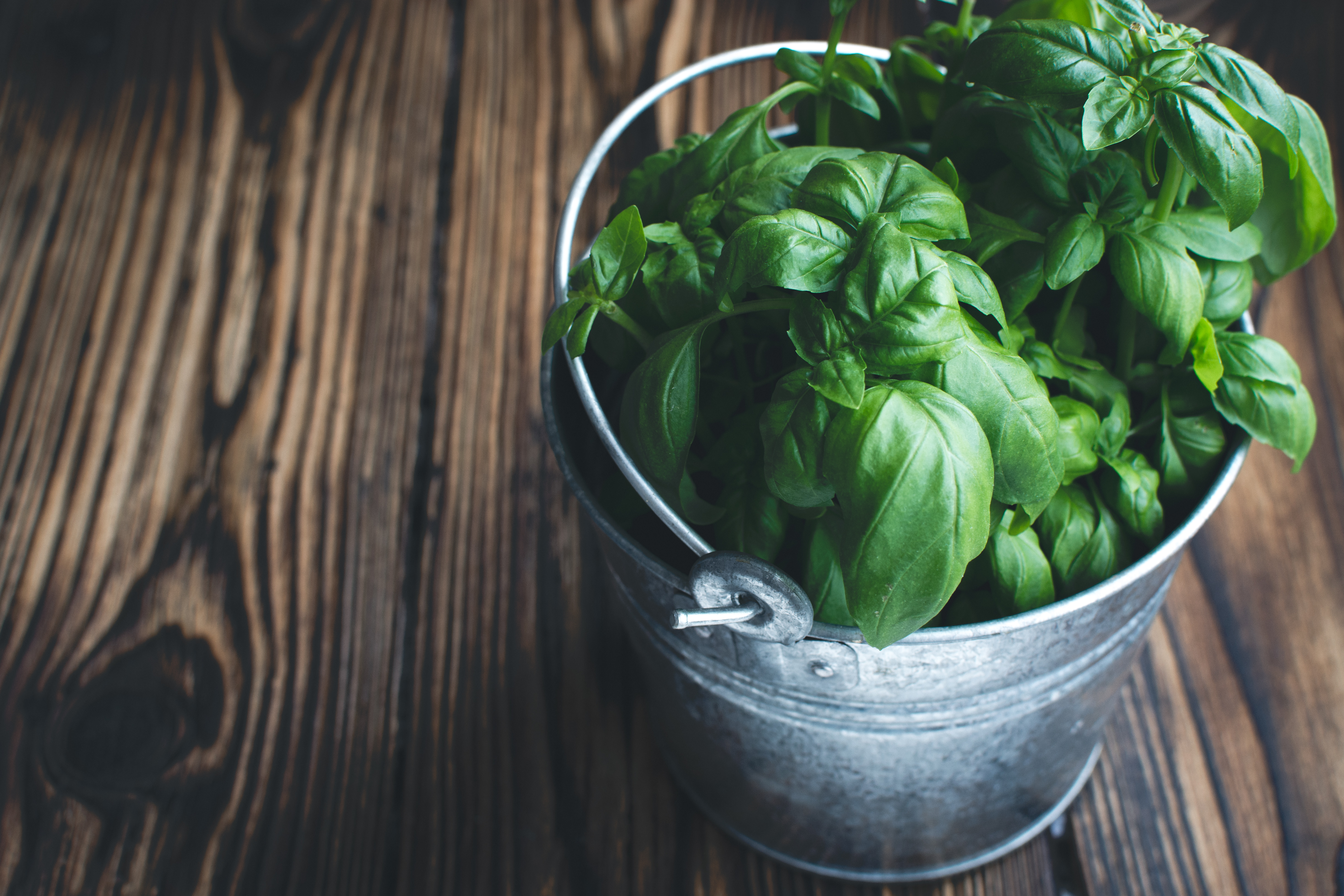 little-bucket-of-basil-3FNR45Q